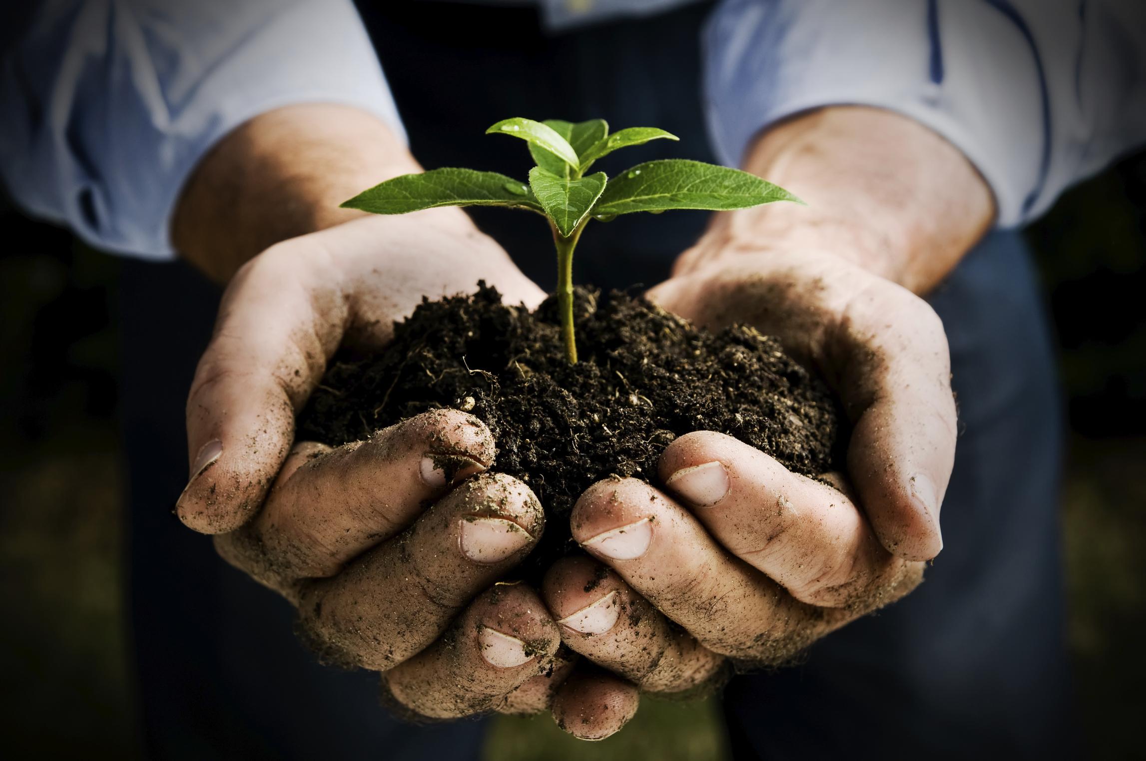 Solo Natura: Biologico, Biodinamico e Vini Naturali