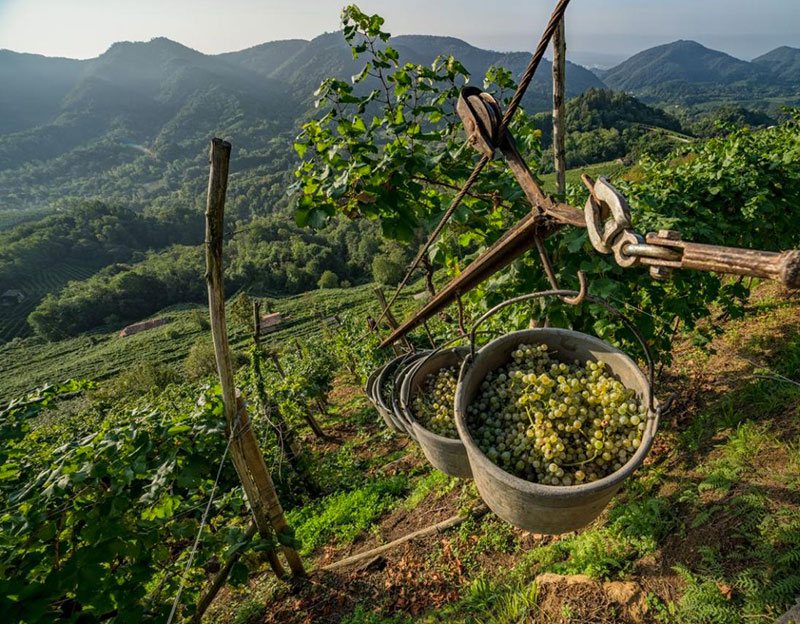 Gli eroi del vino, la viticoltura Eroica.